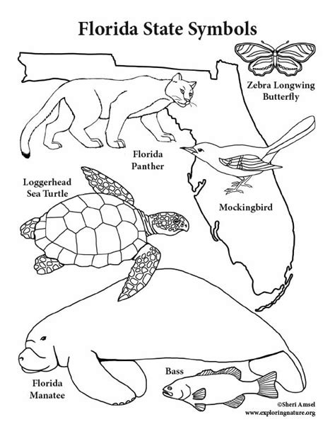 florida state symbols coloring page