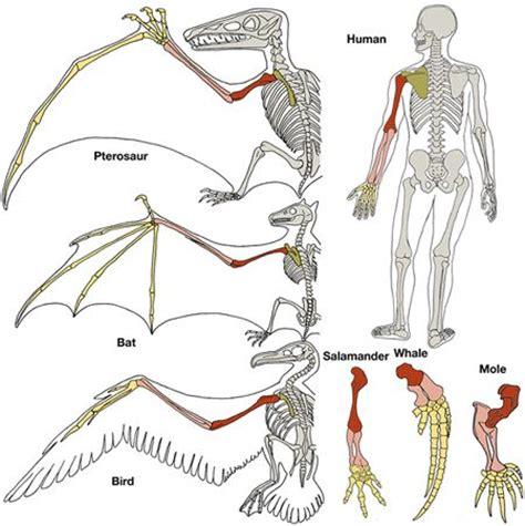 animal anatomy scapula pinterest the world s catalog of ideas