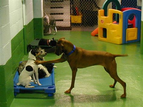 for dogs to play facility