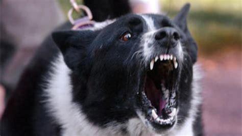 ways  stop fido  barking cbs news