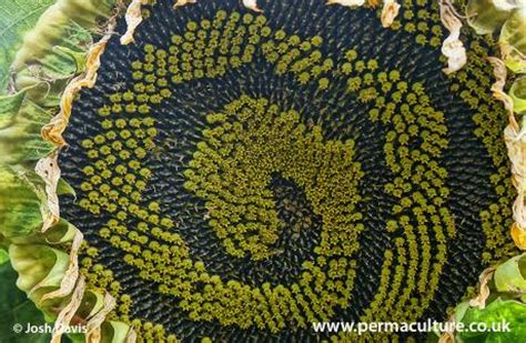 patterns in nature article design life permaculture principles