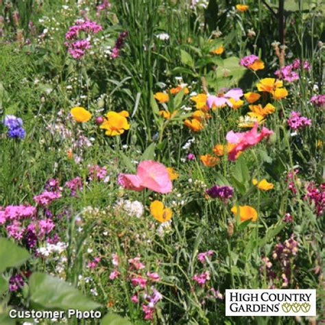 pacific northwest wildflower seed mix low water plants