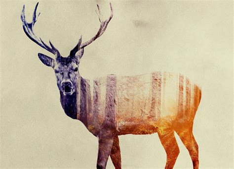 Optical Illusions Wallpaper double exposure animals by andreas lie scene360