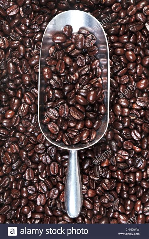 Black Coffee Robusta Roasted photo of a metal scoop with roasted arabica and robusta coffee beans stock photo royalty free