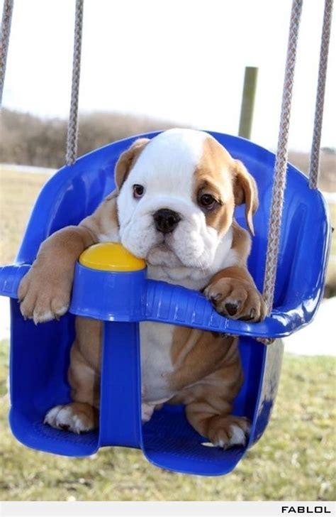 bulldog in a swing english bulldog in a swing favorite places spaces