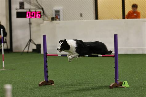 agility competition agility competition