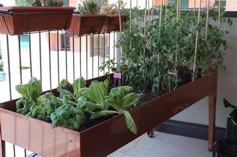 vasi orto orto sul balcone orto in balcone come coltivare l orto