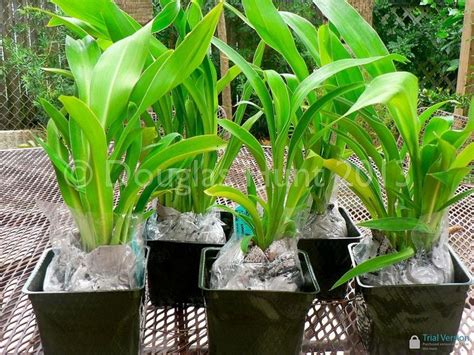 top 28 mail order plant nurseries mail order eco friendly plants and herbs great gift 25