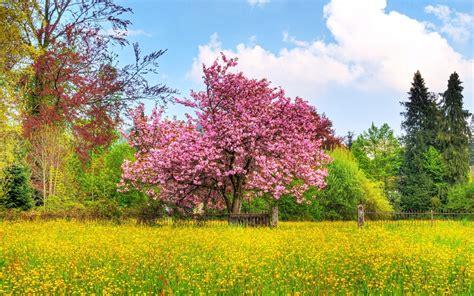 spring wallpaper for mac computer 1440x900 beautiful spring desktop pc and mac wallpaper