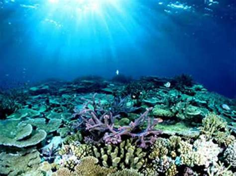 australia's great wonder the great barrier reef youtube