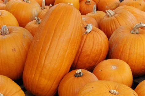 image of pumpkin file pumpkins 6587 jpg