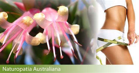 fiori australiani per dimagrire dimagrire con i fiori australiani dr trabalza