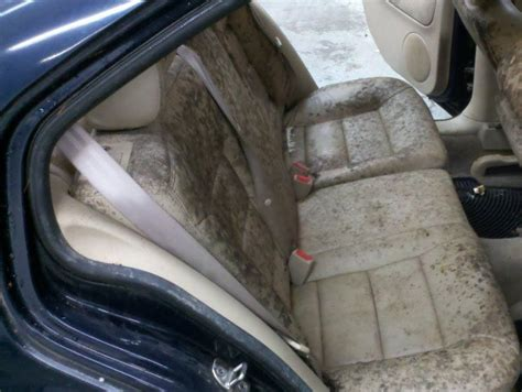how to get rid of smell in carpet how to get rid of mold smell in car carpet www redglobalmx org