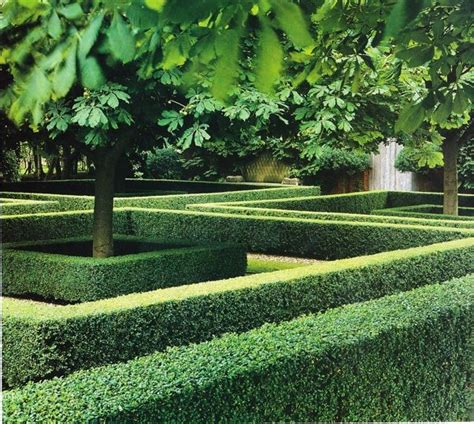 Boxwood Hedge Gardens Hedges And Garden Ideas Hedging Ideas For Gardens