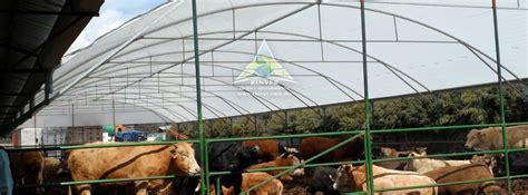 cobertizo ovino cobertizos para bovinos