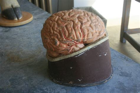 How To Make A Paper Mache Brain - 19th century dr auzoux papier m 226 ch 233 brain for sale at 1stdibs