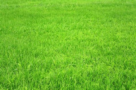 green grass wallpaper download wallpaper green grass texture grass desktop