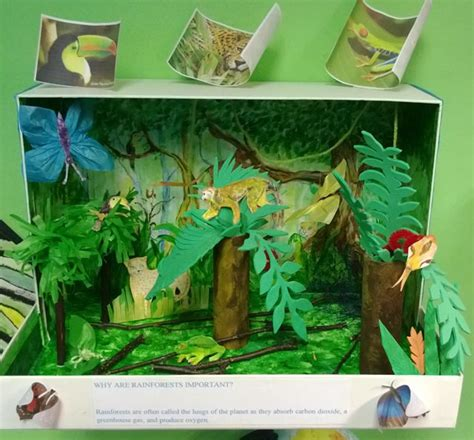 How To Make Rainforest Animals Out Of Paper - rainforest diorama