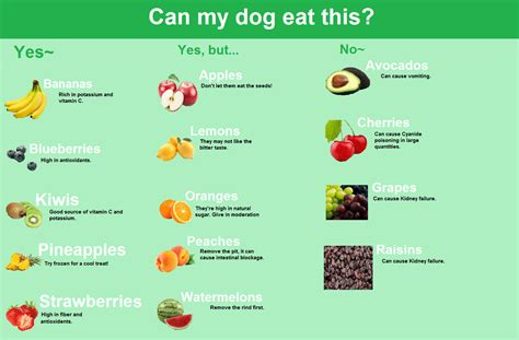 can dogs eat can dogs eat fruits dogable