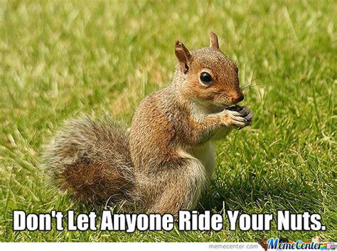 Squirrel Nuts Meme - squirrel nuts by pangea13 meme center