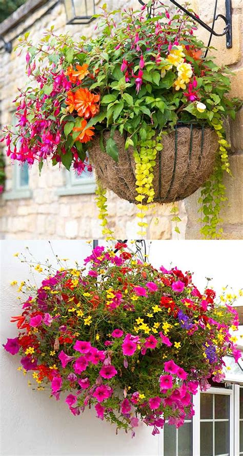 how to plant beautiful flower hanging baskets 15 best