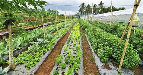 top  organic farms  restaurants   philippines