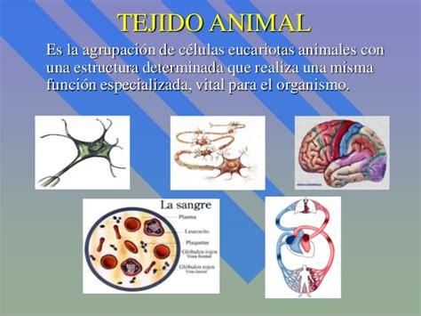 imagenes tejidos animales tejidos animales completo