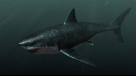 megalodon shark size megalodon shark pictures hd desktop wallpapers 4k hd