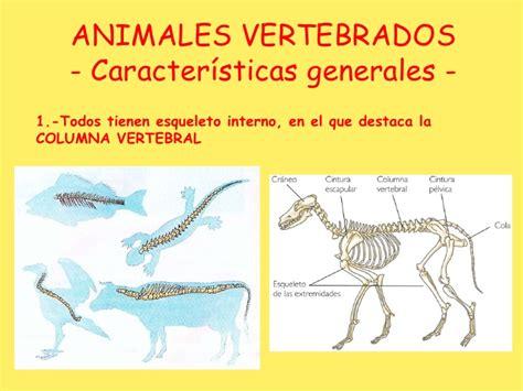 animales vertebrados mamiferos caracteristicas portal animales vertebrados