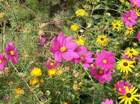 flowers in garden summer flower garden flowers