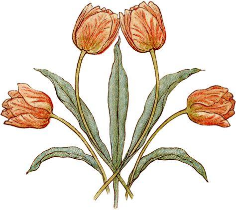 vintage illustration pretty vintage tulips illustration the graphics fairy