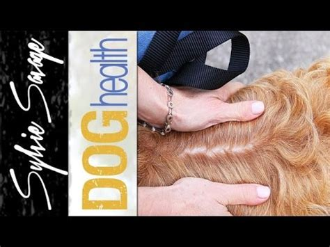 how to get rid of puppy dandruff how to get rid of dandruff models picture