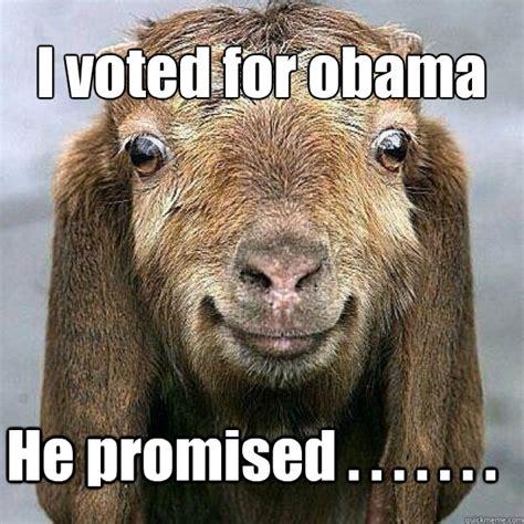 Happy Goat Meme - image gallery happy goat meme
