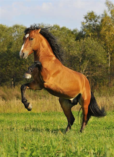 mustang horse mustang horse