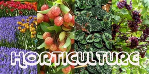 Gardening Degree Central Institute Of Horticulture Set Up In Nagaland