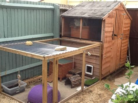 Rabbit Sheds by 1000 Images About Guinea Pig Shed Enclosure On