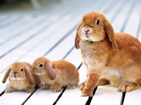 coding rabbit baby bunnies wallpaper wallpapersafari