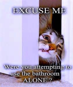 cat wants to go to the bathroom with you dump a day