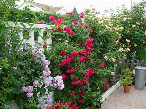 decorar wellington fotos de vuestros jardines 191 c 243 mo es tu jard 237 n
