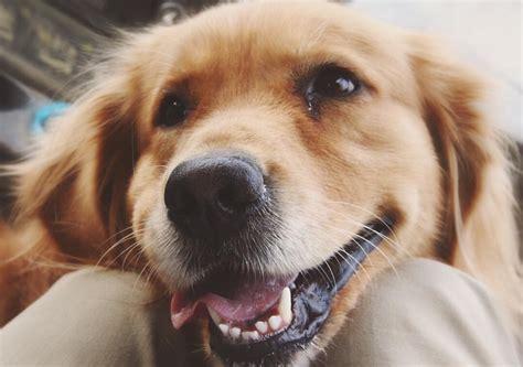 sounds dogs like the best southern names sounds like nashville