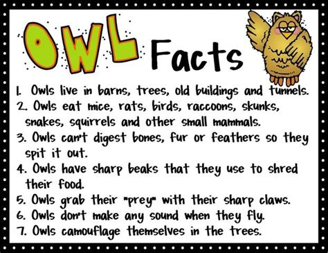 17 best ideas about owl facts on owl