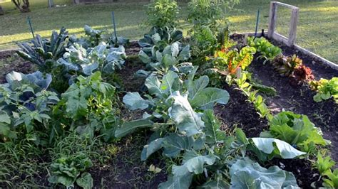 fall vegetables garden growing a fall heirloom vegetable garden 2012 3