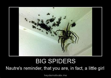 Memes About Spiders - big spiders jokes memes pictures