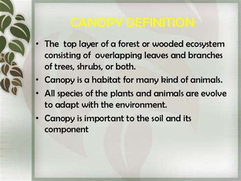 What Is The Definition Of Canopy by Canopy Light