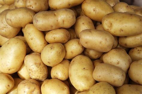 Pictures Of Potatoes by Potatoes Vvrs Australia