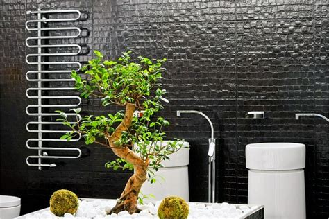 best indoor plant for bathroom best plants for bathrooms 20 indoor plants for the bathroom