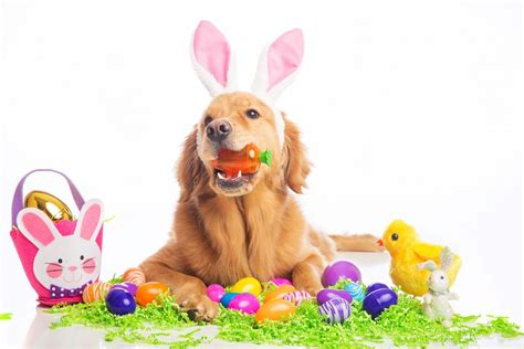 puppy eggs a4apetpantry org
