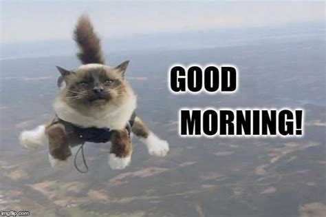 Good Meme Cat - good morning imgflip