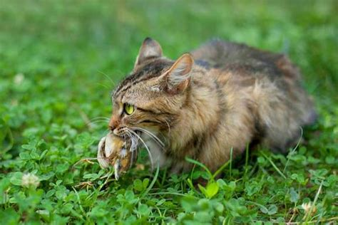 could a cat ban in new zealand save birds
