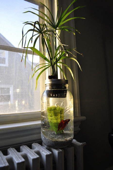 top pins february  aquaponics aquaponics system